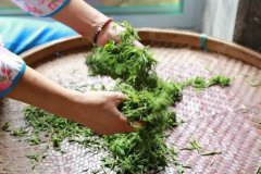茶叶揉捻的步骤和作用