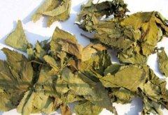 野生甜茶叶的功效与作用